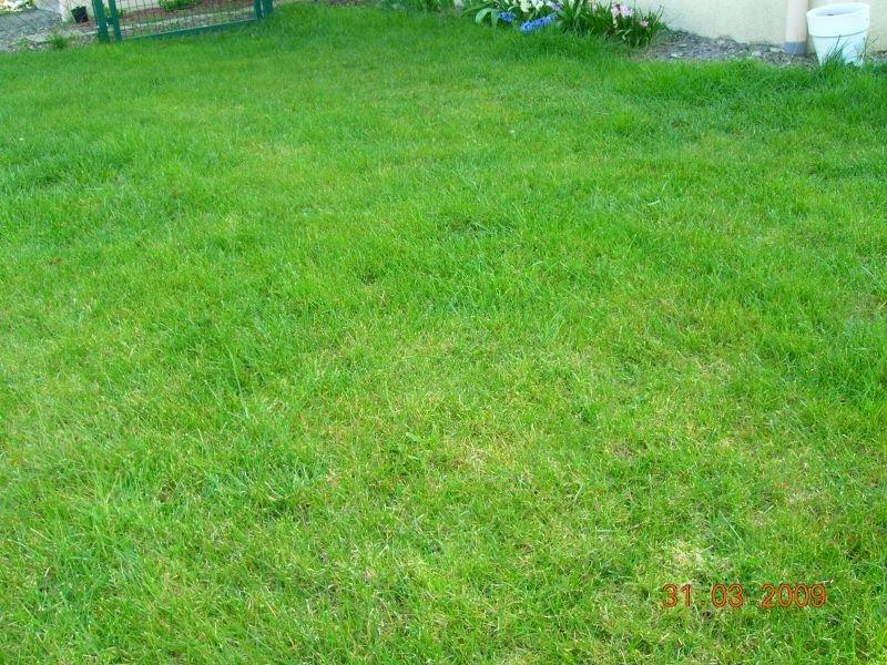 Mise en place de la pelouse jardindusoleil - Combien de temps pousse le gazon ...